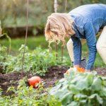 Como provar atividade rural para concessão da aposentadoria?